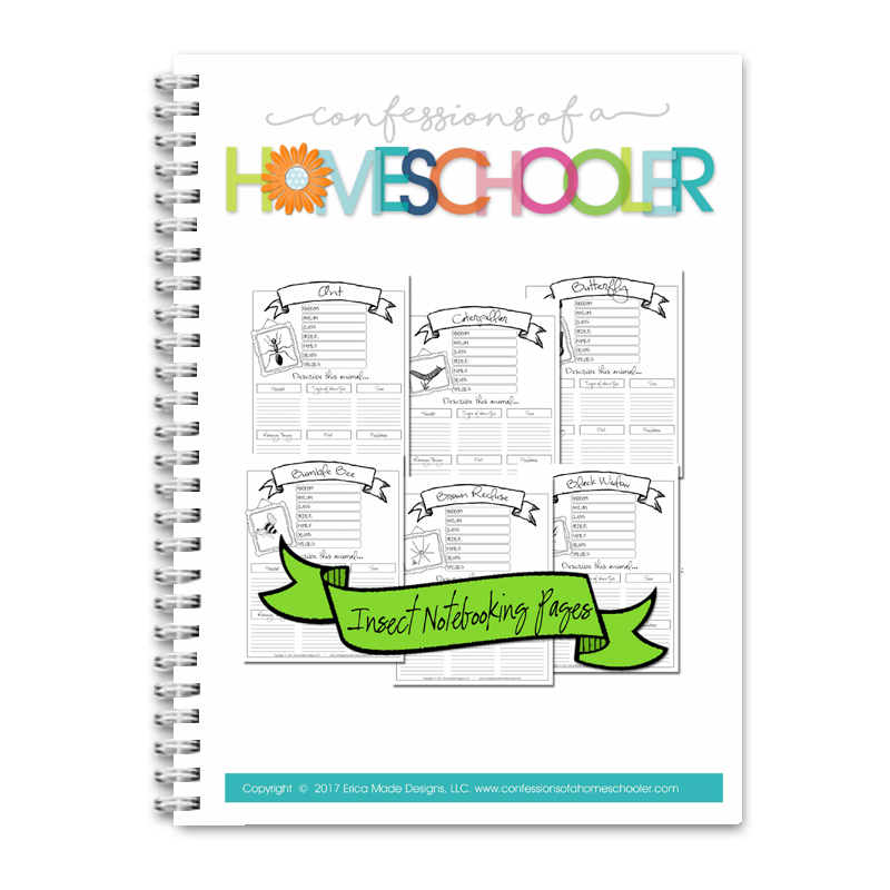 Animal Notebooking Bundle - Insects CLASSROOM PDF
